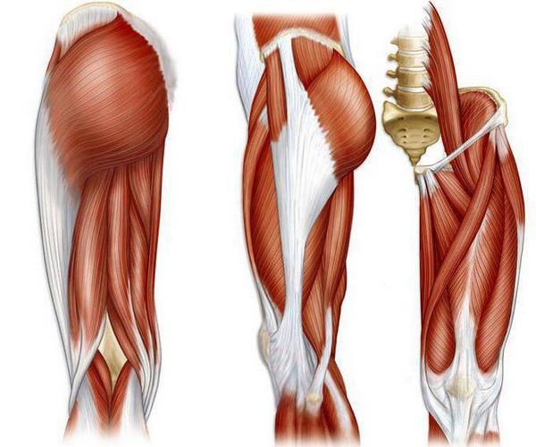 Растягивание фасции – заставь мышцы расти!. 14394.jpeg