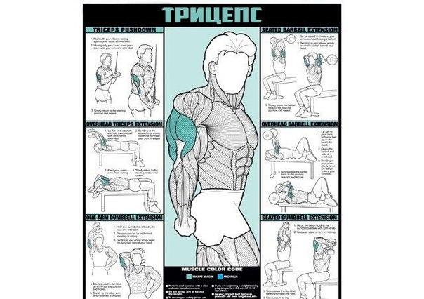 Если ты решил начать строительство своего тела, то этот материал специально для тебя. Если ты решил начать 4