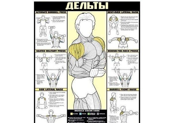 Если ты решил начать строительство своего тела, то этот материал специально для тебя. Если ты решил начать 5