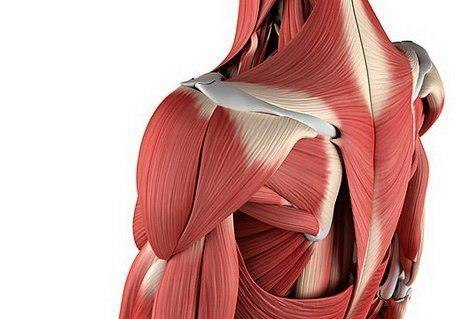 Почему болят мышцы?! И как различить