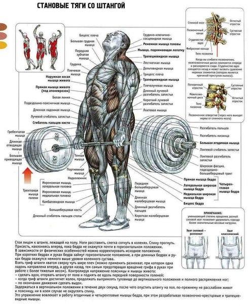 Виды становой тяги