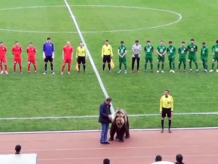 Видео с медведем: косолапый открыл футбольный матч в Пятигорске. 14731.jpeg
