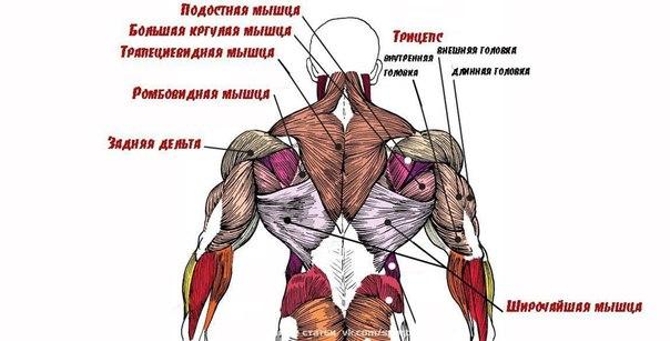 Десять заповедей обретения мощной спины