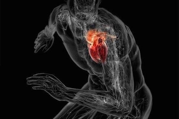 Тренировка сердца и развитие выносливости. 13790.jpeg