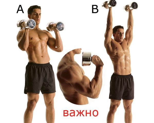 Качаем широкие и мощные плечи эффективными упражнениями дома ... | 480x600