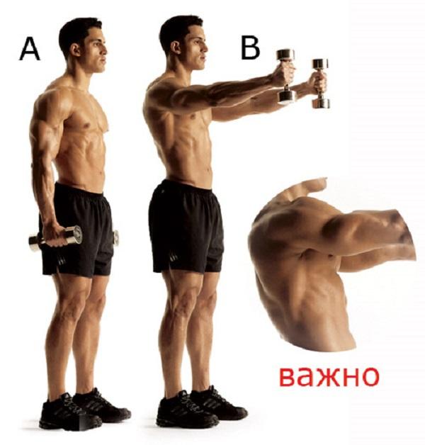 Как сделать мощные мускулистые плечи. 13846.jpeg