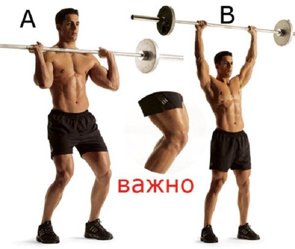 Как сделать мощные мускулистые плечи. 13848.jpeg
