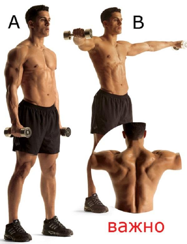 Как сделать мощные мускулистые плечи. 13849.jpeg
