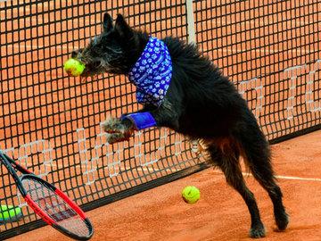 Уличные собаки нашли себе работу на теннисном турнире