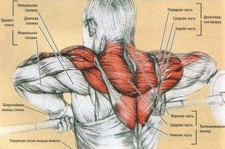 Как раздвинуть плечи