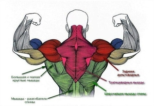 Спина - упражнения и особенности тренировки
