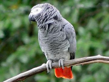 Жена футболиста купила попугая за 150 тысяч рублей