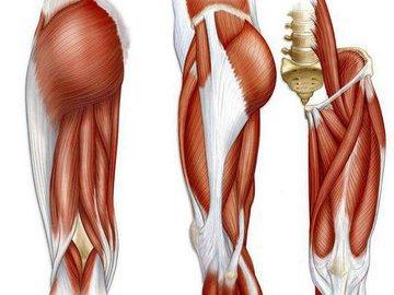 Растягивание фасции – заставь мышцы расти!
