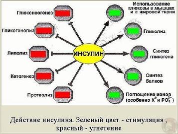 Российский колхоз попал в книгу «Рекордов Гиннеса»