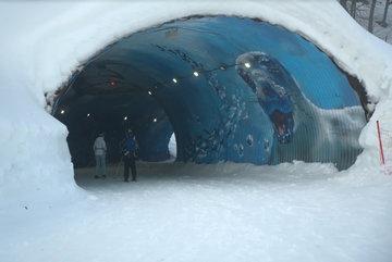 В горах Сочи художники превратили тоннель в аквариум