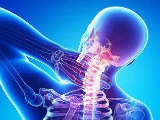 Мышцы: фазические и тонические